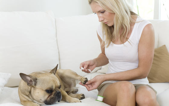 Curso online de Cuidados Caninos