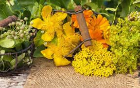 Curso a distancia (Online) de Plantas Medicinales