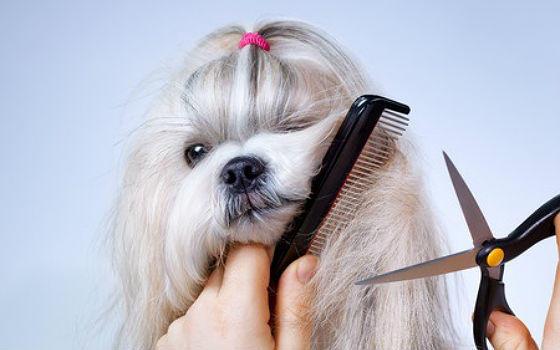 Curso basico de corte de pelo