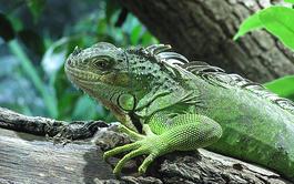 Curso online de Cuidados de Reptiles y Anfibios