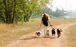 Curso online Disfruta del paseo con tu perro