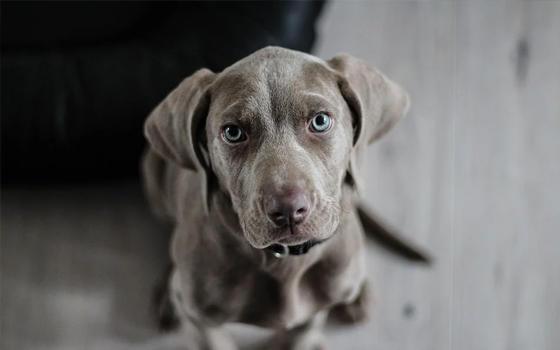 Curso online Observemos las orejas de nuestro perro